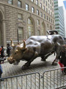 New York bull, 2014