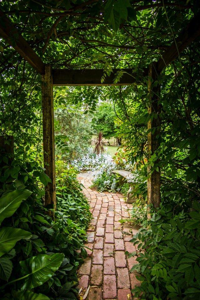 Lush green garden with a path winding through it