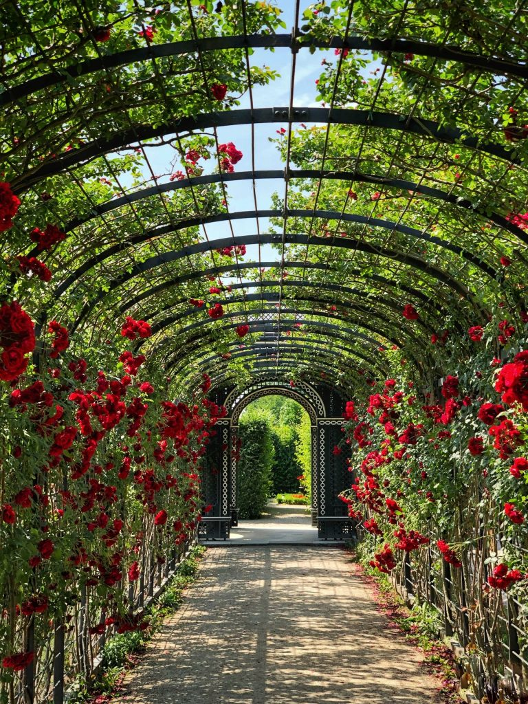 An arbour draped in red roses leading through a garden
